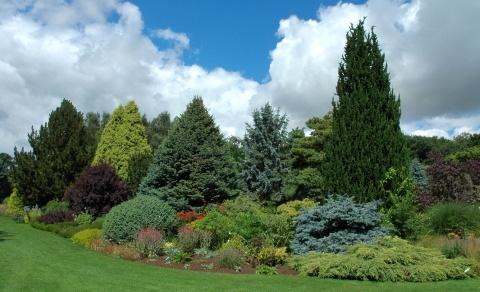 Conifer Border Garden Design Garden Evergreen