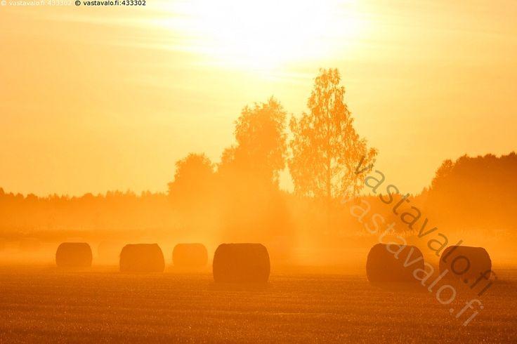 Heinäpaalit pellolla III - pelto peltomaisema maalaismaisema heinäpaali heinäpaalit heinäpelto pellolla rulla ilta auringonlasku ilta-aurinko metsä pöly pölyinen pölyssä