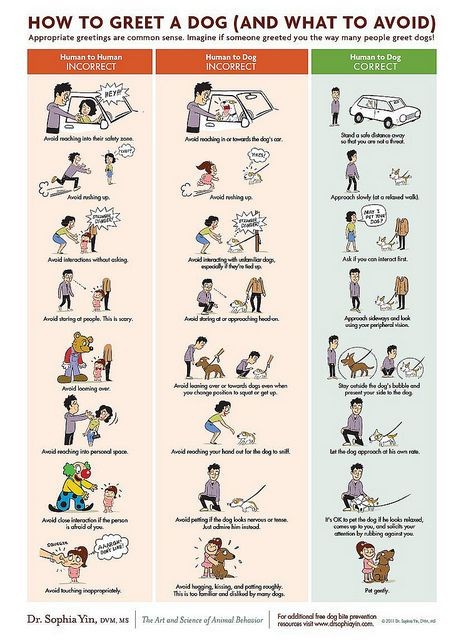 YES! If you see someone with a dog, these are the right ways to respond.