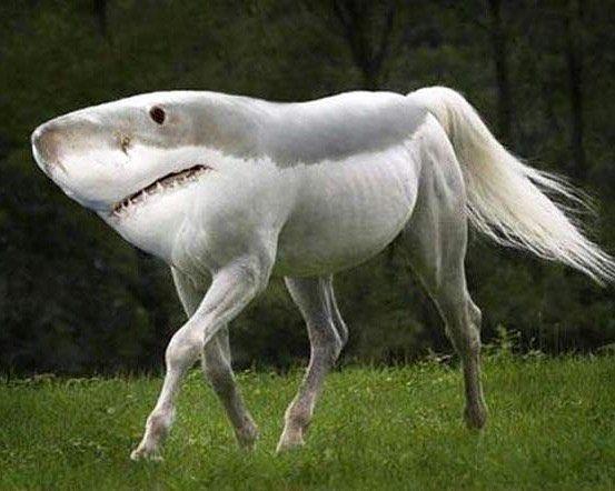 Merci #photoshop !  #digitalagency #shark #horse #creativestudio #Ux #coding #dev ##development #inspiration #digital #ui #mobile #seo #socialmedia #webmarketing #website #frenchweb #ia