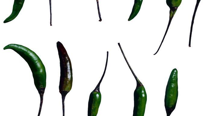 Como secar a pimenta dedo de moça. As pimentas dedo de moça são pequenas e finas, e crescem em uma variedade de tons vermelhos e verdes. Elas são fáceis de cultivar e normalmente produzem colheitas abundantes. Estas pimentas são extremamente ardidas e usadas em muitos pratos asiáticos. As duas formas mais comuns de secá-las são a secagem ao ar ou a secagem em estufa. Uma vez ...