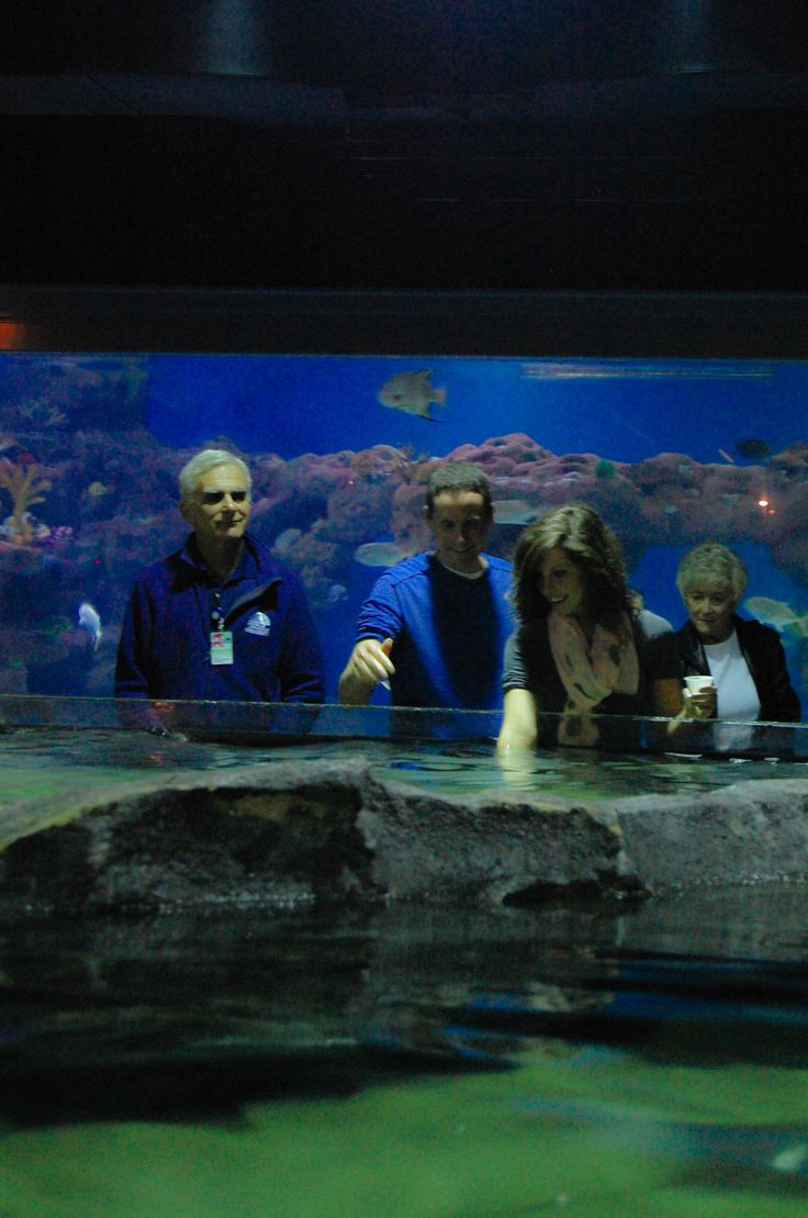 50 best greater cleveland aquarium images on pinterest for Stingray fish tank