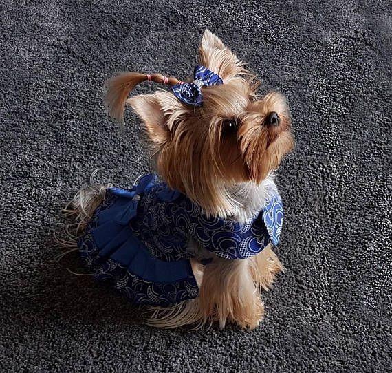 Perro vestido para perro pequeño del animal doméstico, ropa del perro chica, vestido de traje de perro, Yorkie ropa, ropa para perros pequeños, vestido de perro Yorkie, pequeño vestido del animal doméstico, perro talla S, Diseño del vestido de perro y hecha por SmallDogFashion Perro