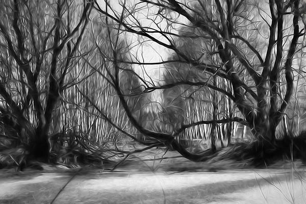 9 Lack And White Artistic Painterly Icy Entrance Blocked By Braches Leif Sohlman