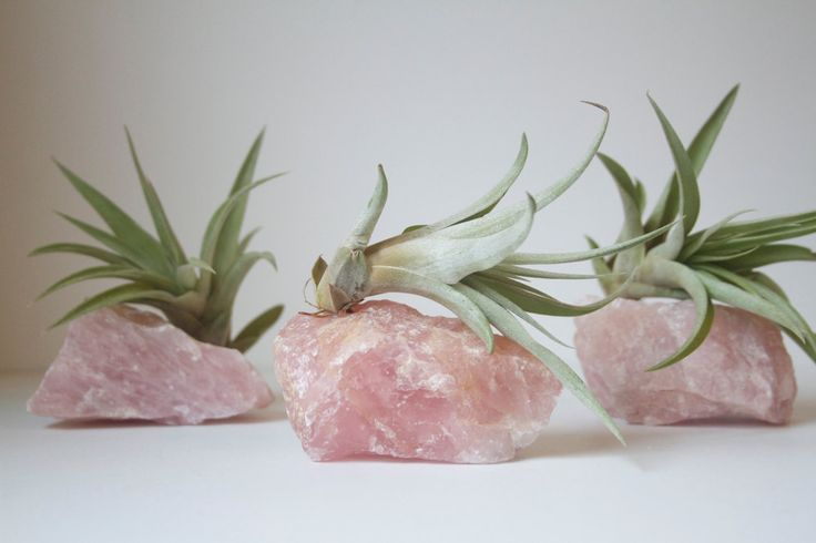 Crystal Garden Air Planters by Falcon and Finch on Etsy      More like this