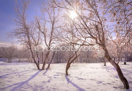 Зимние деревья в солнечном свете — Стоковое фото © floraapluss #102760748