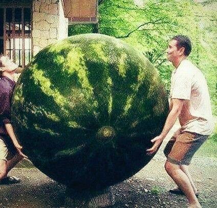 Thailand. Giant watermelon.