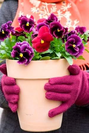 Kleur je tuin met violen in de herfst /  Brighten up your garden during autumn