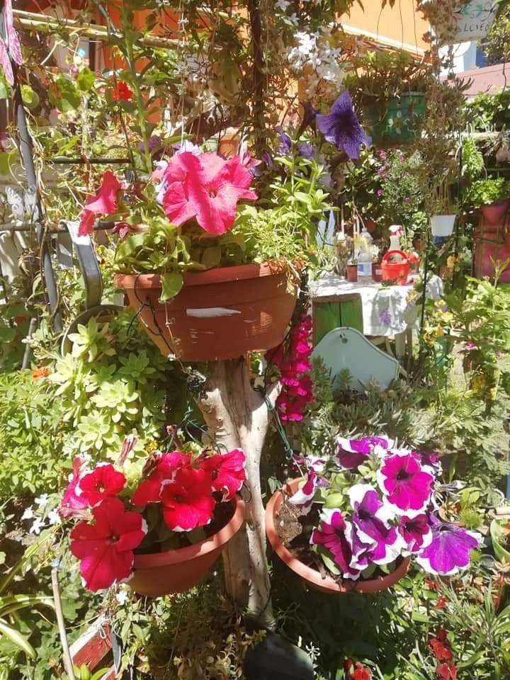 Pin Di Greysis Castillo Su Giardino In Casa Nel 2020 Giardini Di