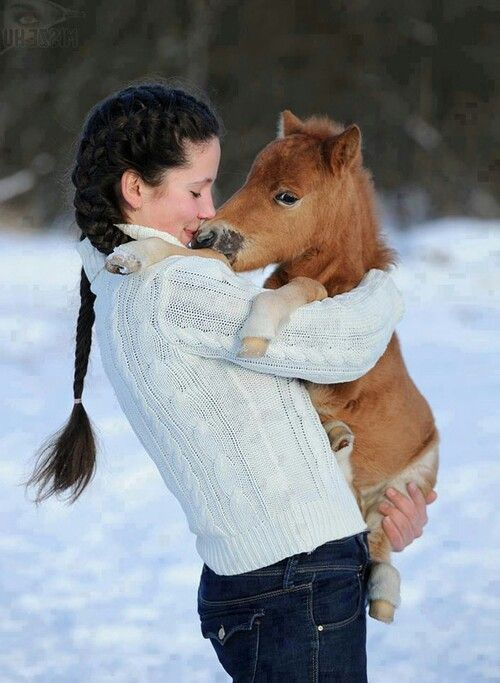 Mini horse so adorable