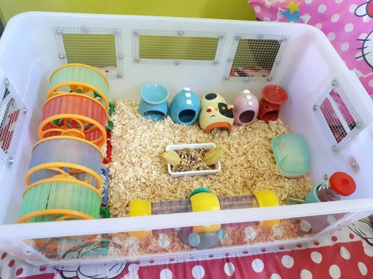 Hamster bin philippines pat in 2020 hamster bin cage