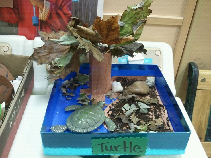 Image result for turtle habitat activities