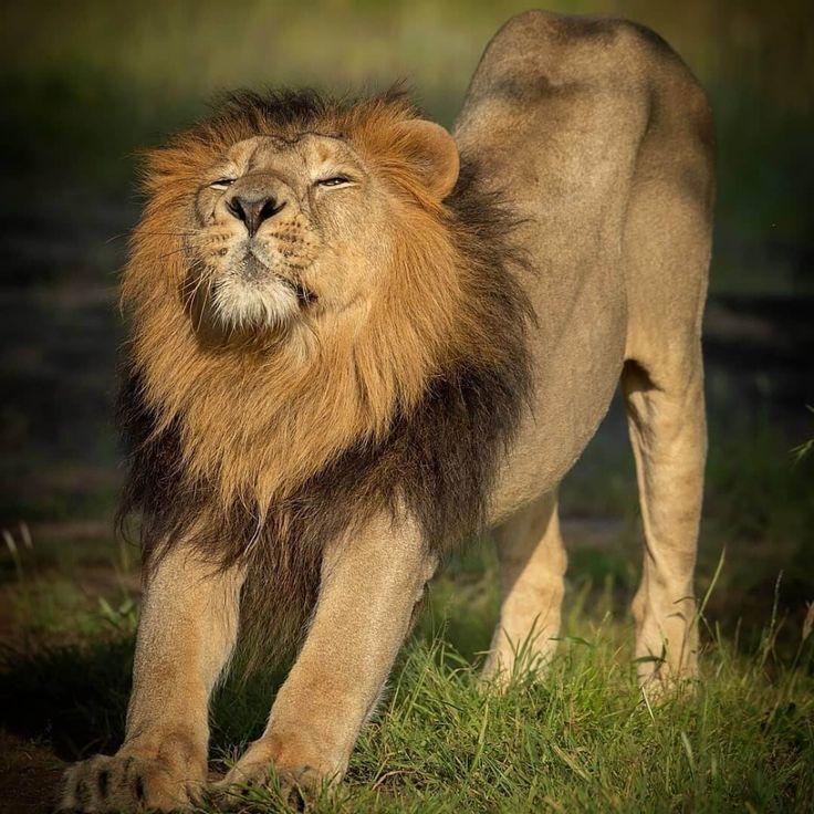 Top 14 Big Cat Species in India Popular & Biggest Wild
