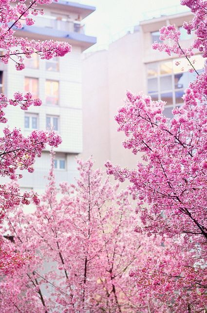 These Pink Cherry Blossoms remind us of our beautiful April 2015 Must Have brochure!