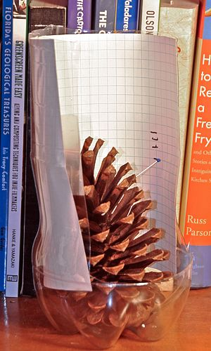 Science Experiment : Pinecone Weather   The Happy Scientist