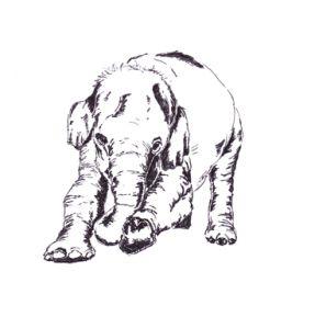 My favourite elephant