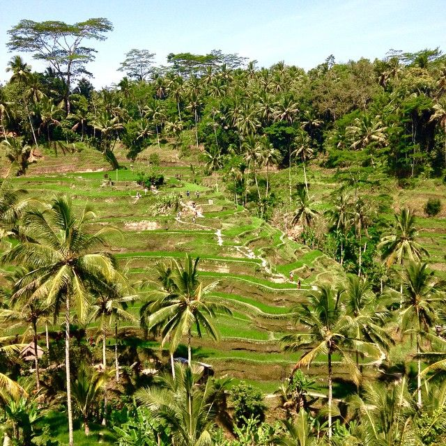"""Lego playground. Tegalalang, Ubud, Bali, Indonesia """"Look at what the Forefathers left for us, Can you feel the spirit moving accordingly, one thing I realize about this day, have we learned a thing or two from what our Forefathers left."""" Jebraw #ricefield #ubud #magictemptetion #indonesia #bali #green #nature #landscape"""