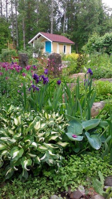 Kosteat olosuhteet ovat hellineet kasveja 2015