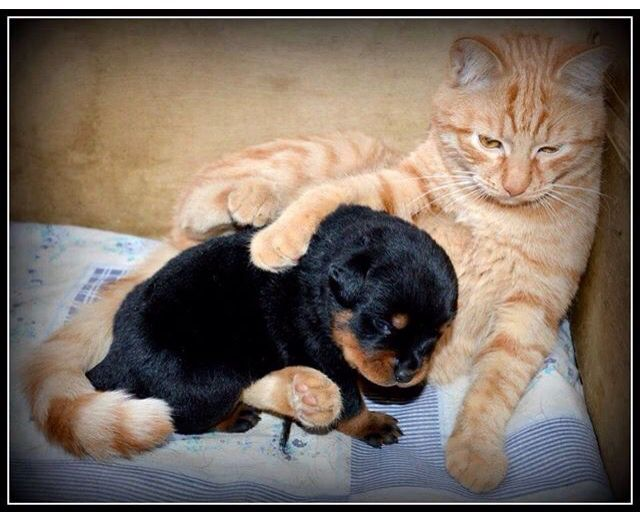 Baby Playing With Dogs And Cats