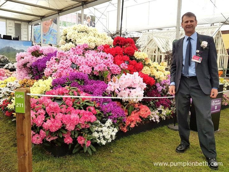 David Millais, Chairman of the RHS Rhododendron, Camellia and Magnolia Group, in…