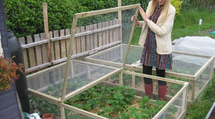 New Strawberry Bed Cages!