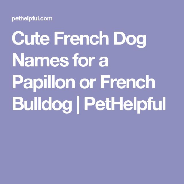 Cute French Dog Names for a Papillon or French Bulldog | PetHelpful