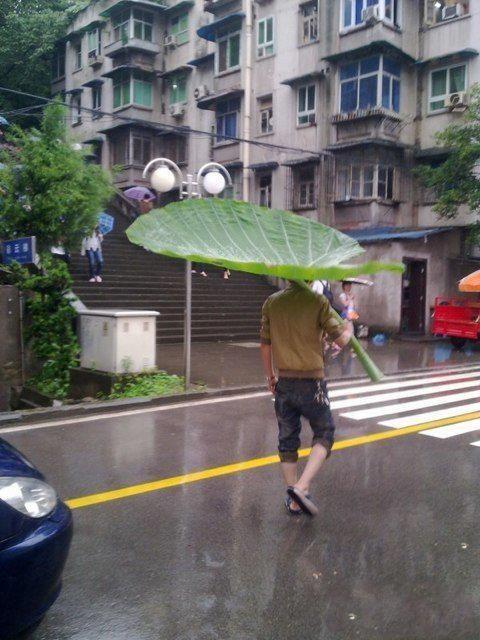 leaf umbrellaLike A Boss, Umbrellas, Green, Mothers Nature, Totoro, Funny, A Bugs Life, Leaves, Rain
