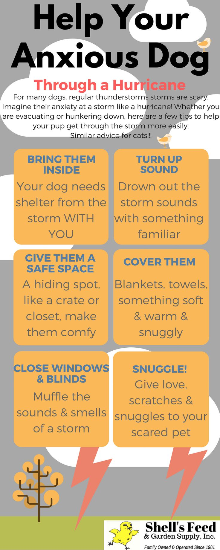 Infographic we made to help owners help their pets through hurricane weather or any storm