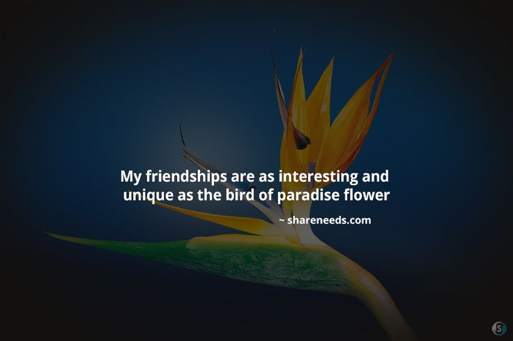 My friendships are as interesting and unique as the bird of paradise flower  #friendshipquotes