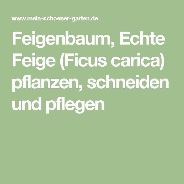 25+ Best Ideas About Feigenbaum On Pinterest | Pflanzen ... Grune Zimmer Pflanzen Schoner Indoor Garten