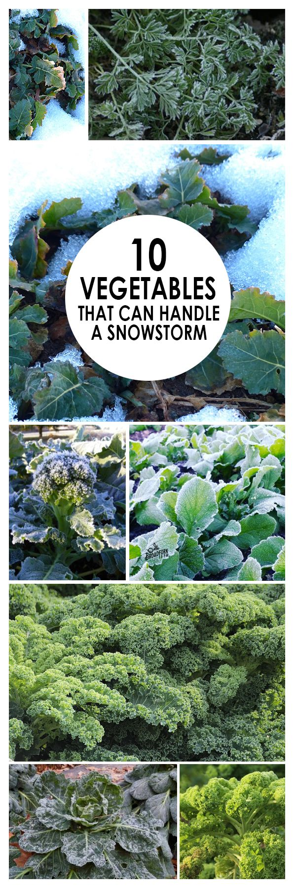 15309 best winter crops images on pinterest winter vegetable