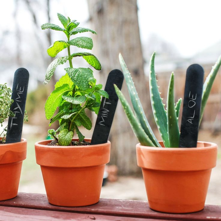 Amazon.com : Slate Garden Markers, Labels For Your Plants: Patio, Lawn