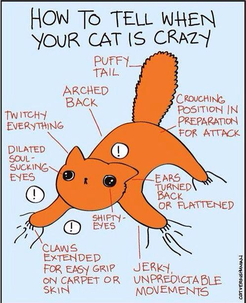Crazy Cat Quotes chart -- I thought it was if he was breathing. :
