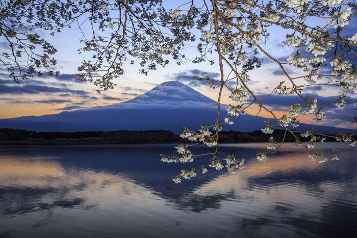 桜と富士山を求めて、富士急周遊バスで巡る「河口湖」のおすすめ | icotto[イコット]