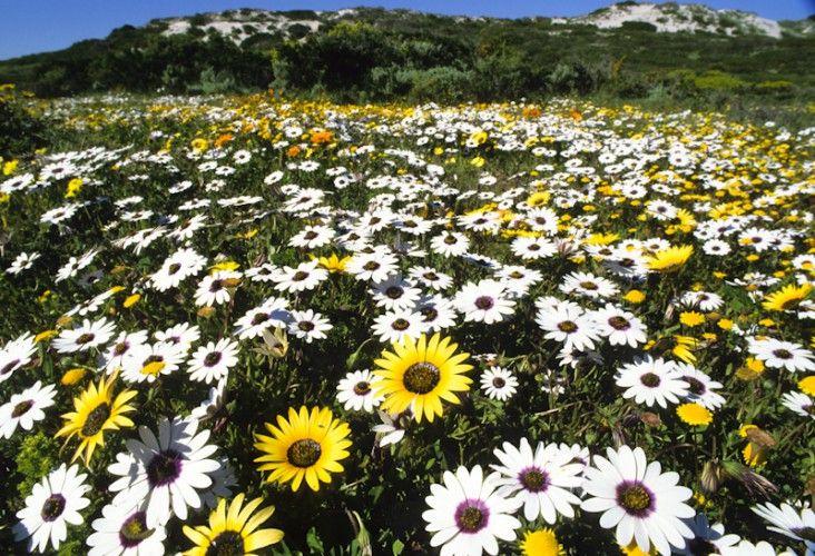 West Coast N.P., South Africa