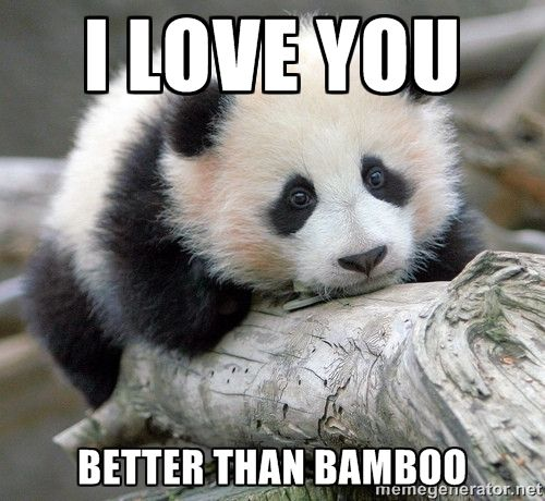 panda memes - Google Search                                                                                                                                                                                 More