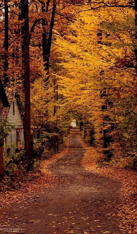 Country Road--Beautiful Mother Nature