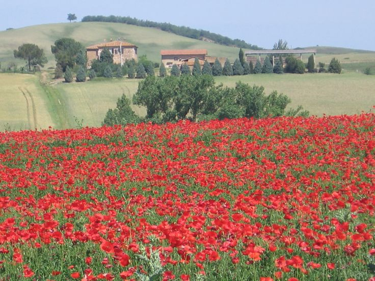 I love spring anywhere, but this is a picture we took during a trip to Italy of one of my favorite Spring memories of all time.  Driving through Tuscany we came upon a field of just-opened poppies.  It was breathtaking and just the kind of scene you'd expect to stumble upon in Tuscany.  Italy is one of my favorite places to visit for so many reasons.  This picture shows just one of them!: Places To Visit, Favorite Places, Favorite Spring, Beautiful Places, Tuscany Italy, Painting Ideas, Just Opened Poppies, Progress Painting