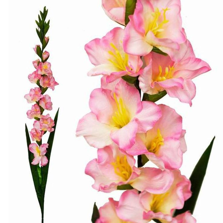 "6 Gladiolus Stems - Pink |  Gorgeous Gladiolus flowers symbolize strength, integrity, and passionate love. Charming and vibrant with towering stems, this August birth flower and 40th wedding anniversary flower has a mesmerizing appeal about it. The long and pointed shape of the leaves gave them this name that comes from a roman word ""gladius"", meaning sword. These sword shaped leaves flowers evoke the drama of Roman gladiators. Our silk replicas of these legendary blooms preserve the elegant…"