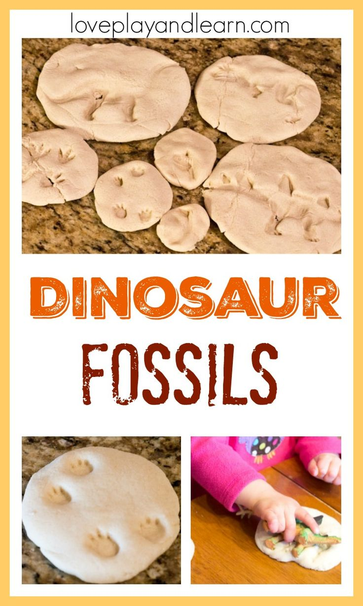 What is a Fossil? | AMNH