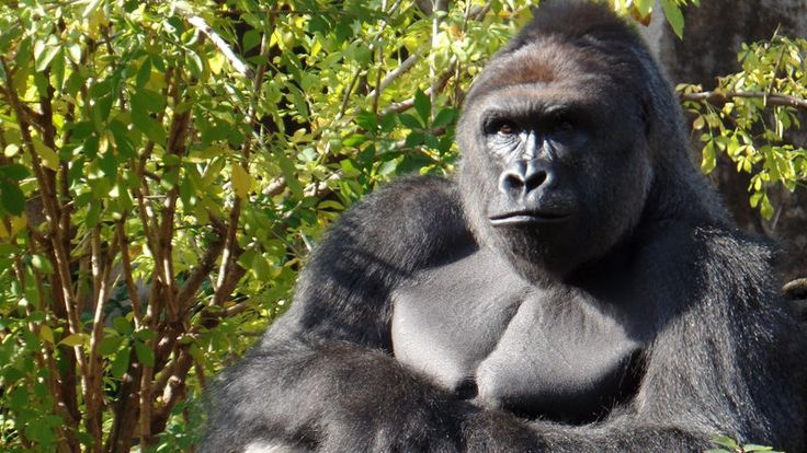 Petition · Cincinnati Police Department : Justice for Harambe: Hold the parents accountable · Change.org