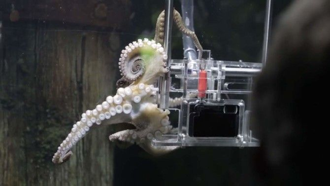 """From the department of odd: An octopus at a New Zealand aquarium was given a camera and trained to photograph tourists. It took """"Rambo"""" the octopus only three attempts to understand how the process works. — Lynda Richardson, Senior Staff Editor, Travel"""
