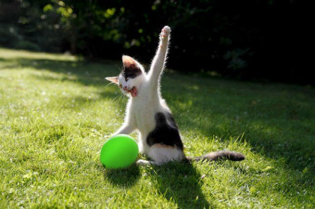 20+ Poze amuzante cu pisici naravase | 6 din 24