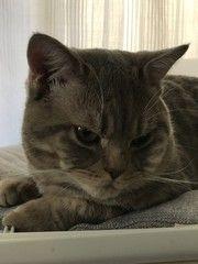 Cute cat portrait