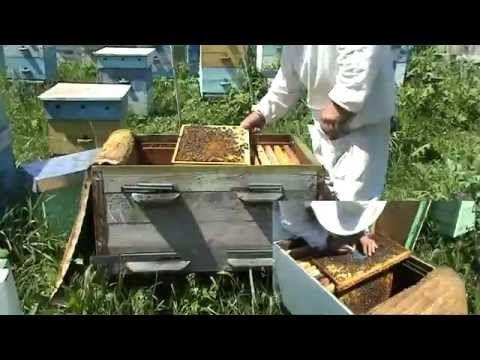 пчеловодство вывод маток с нуля - 411 роликов. Поиск Mail.Ru