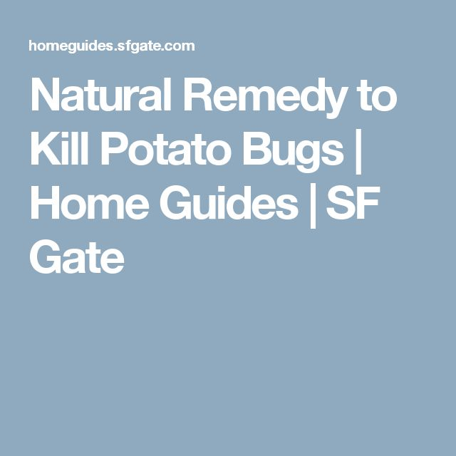 Natural Remedy to Kill Potato Bugs | Home Guides | SF Gate