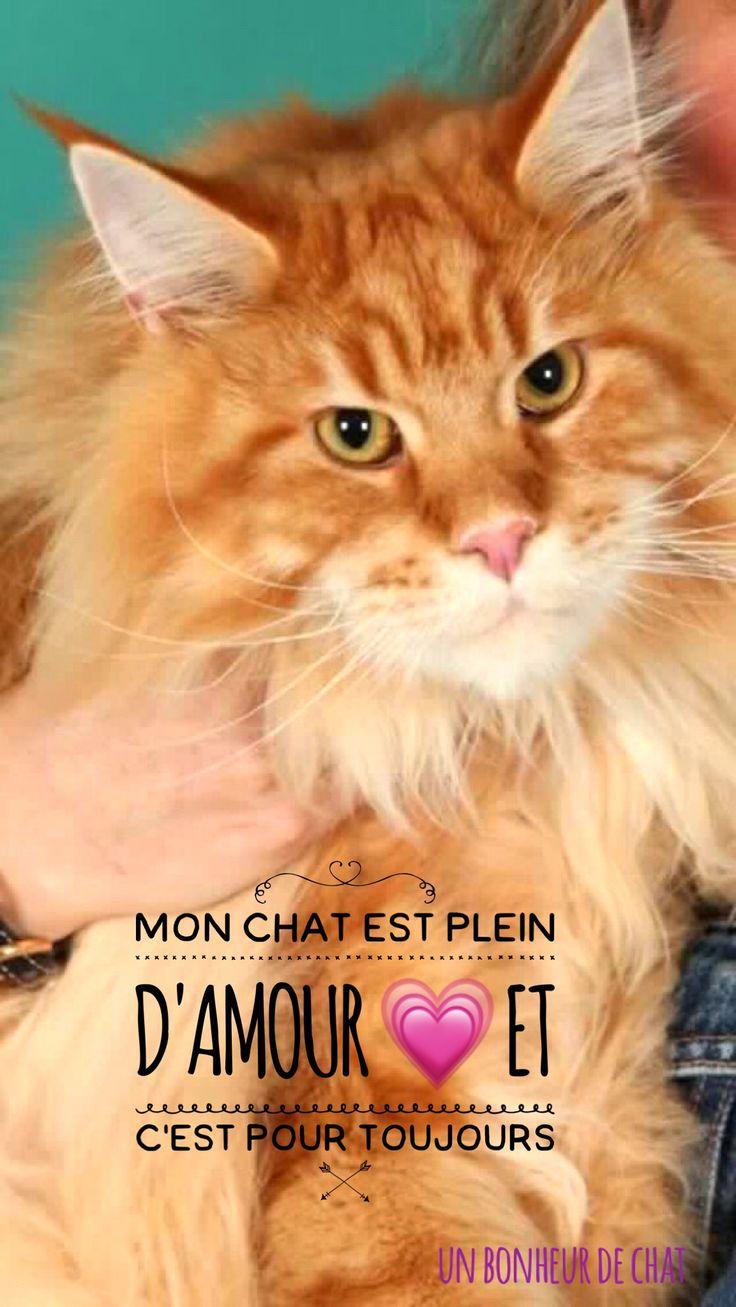 Mon Chat est plein d'amour 💗et c'est pour toujours
