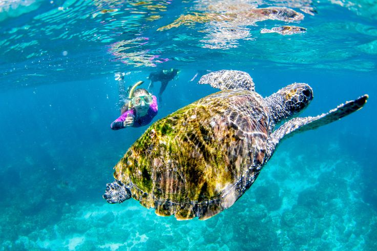 Swim with turtles at Clarkes Beach! #ByronBay #ClarkesBeach #NorthCoastParks #Turtles #Australia
