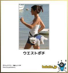 第3弾!犬だけの笑える「bokete」画像35選 - ペット日和