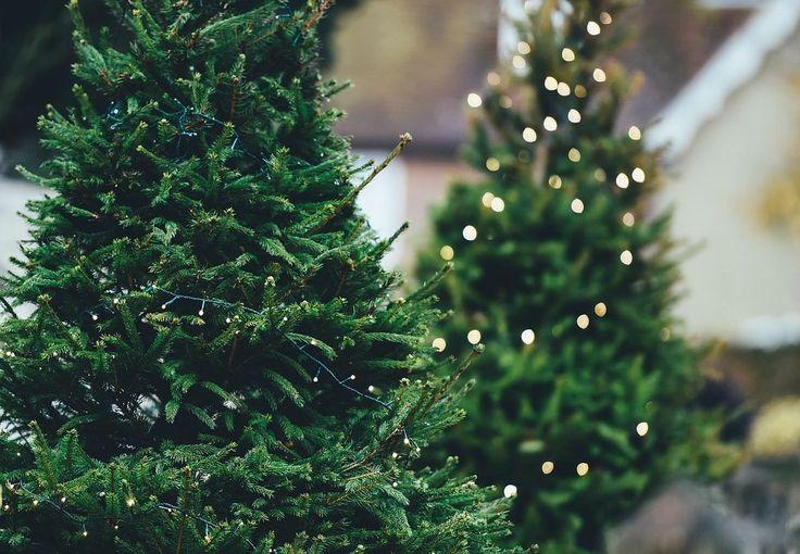 Świąteczne dekoracje ogrodu  inspiracje